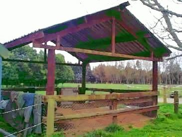 view of horse pen