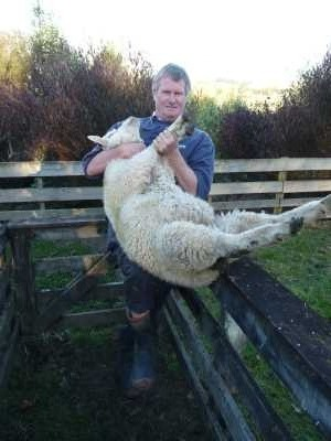 how to lift a sheep