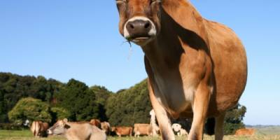 Spotting and Treating Mastitis